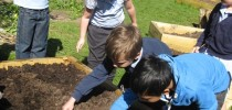 Gardening in our Raised Beds